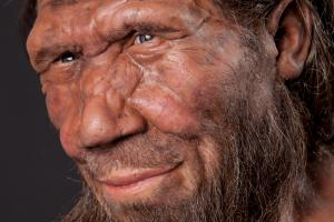 Neanderthal Model (c) Trustees of NHM