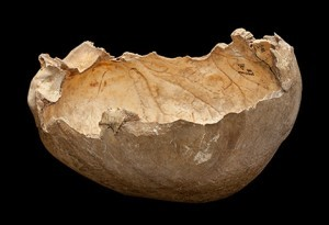 Skull cup found at Gough's Cave, now on display at the Natural History Museum.