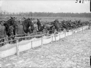 Horses of the Royal Field Artillery watering on the Fricourt-Mametz Road, July 1916. IWM Q.882